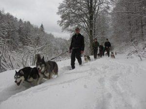 Husky-Trekking im Schnee